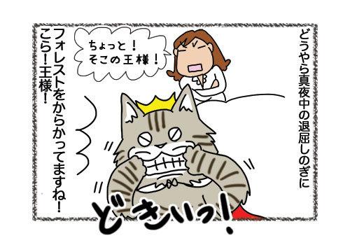 14022019_cat4.jpg