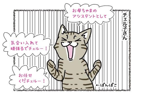 15022019_cat2.jpg