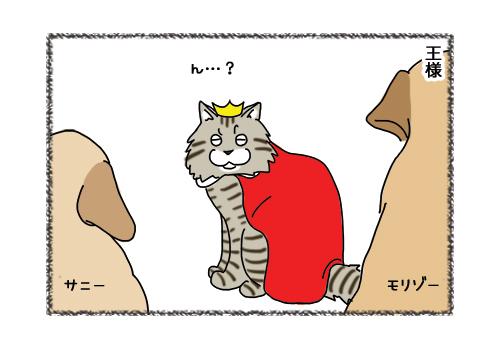 15022019_cat3.jpg