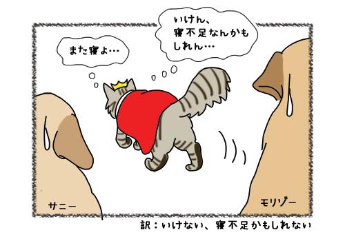 15022019_cat5.jpg