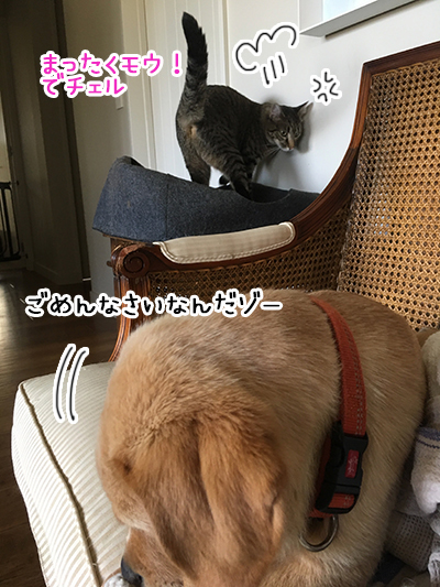 16022019_cat3.jpg