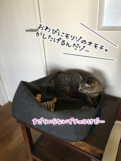 16022019_cat4.jpg