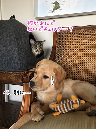 16022019_cat6.jpg