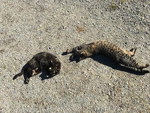 18022019_cat2.jpg