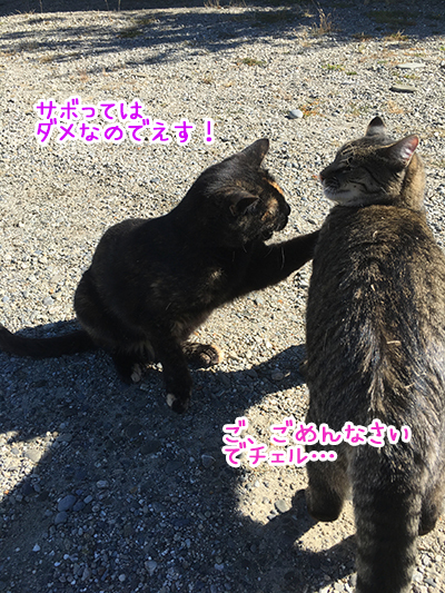 18022019_cat4.jpg
