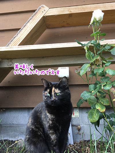 21032019_cat7.jpg