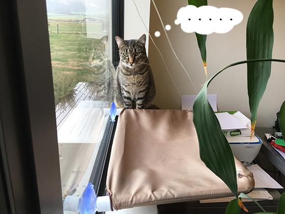 25032019_cat1.jpg