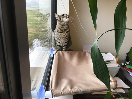 25032019_cat2.jpg