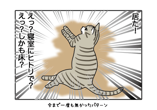 29012019_cat3.jpg