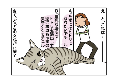 29012019_cat4.jpg