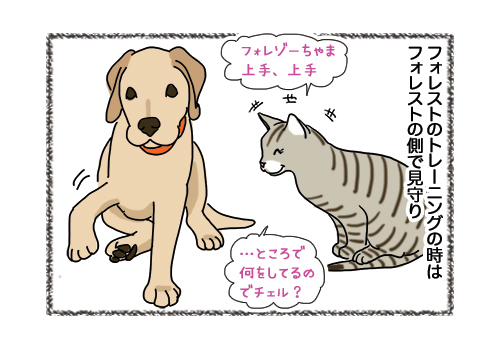 31012019_cat1.jpg