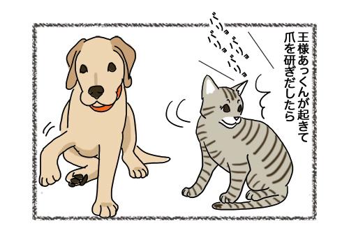31012019_cat2.jpg