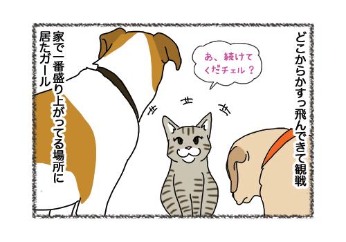 31012019_cat5.jpg
