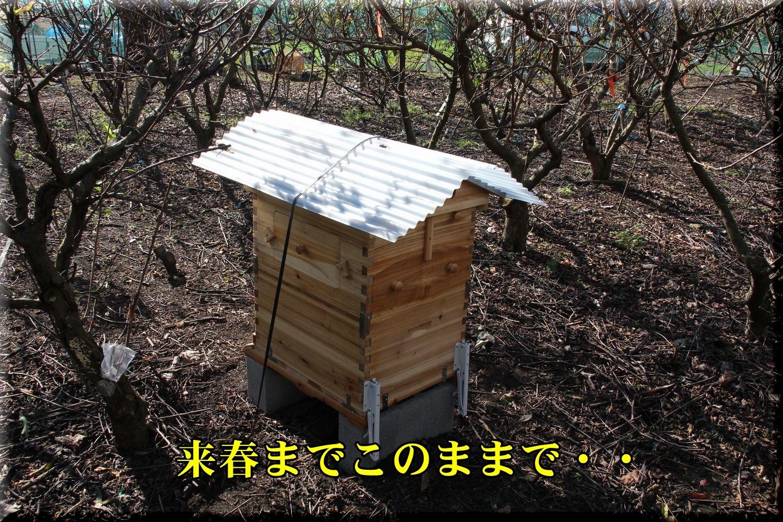 1FHbee181120_012.jpg