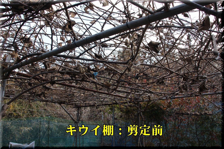 1_2pre_kiui190107_004.jpg