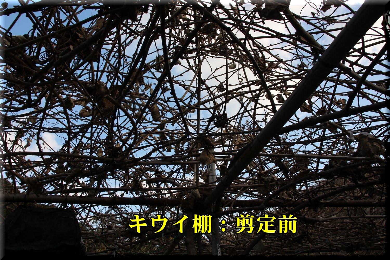 1_3pre_kiui190107_005.jpg
