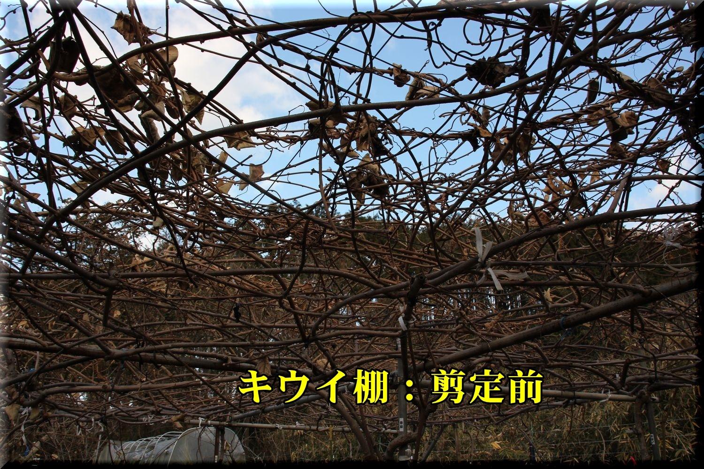 1_4pre_kiui190107_006.jpg