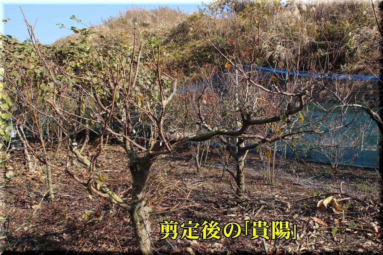 1a_kiyo181220_015.jpg