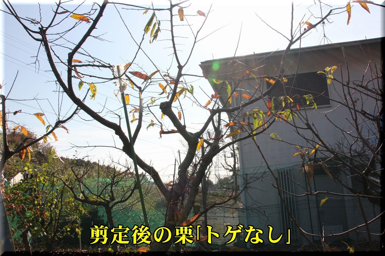 1a_toge181220_012.jpg
