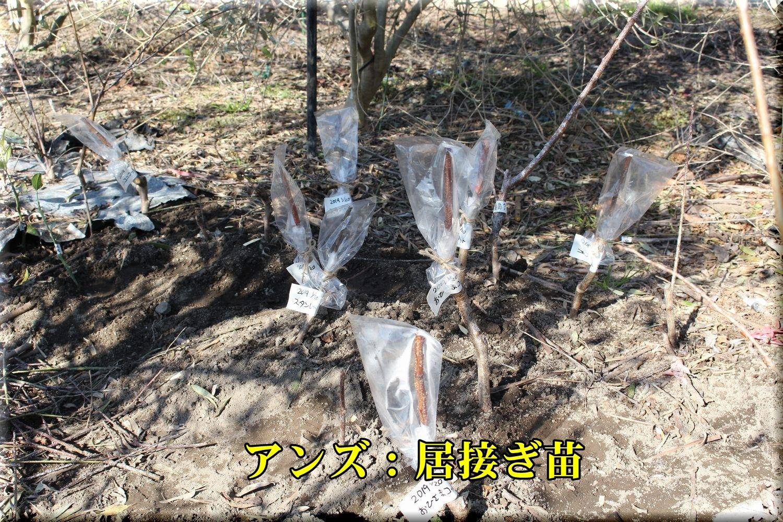 1anzu_kakusyu190119_006.jpg