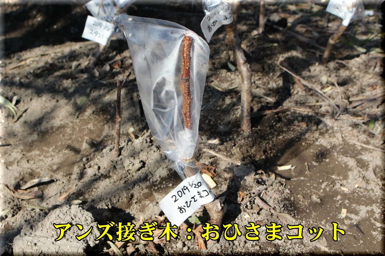 1anzu_ohisama190119_002.jpg