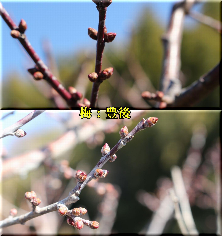 1bungo190201_009.jpg