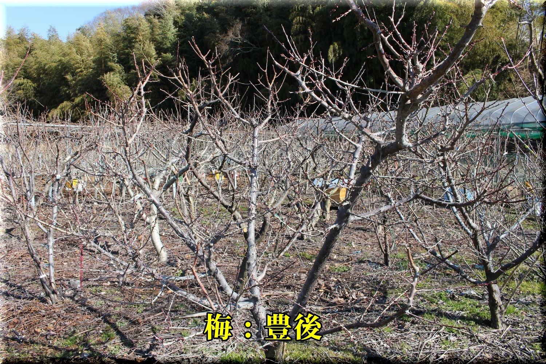1bungo190201_011.jpg