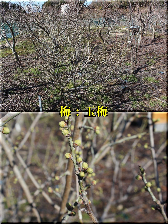 1gyokubai190201_003.jpg