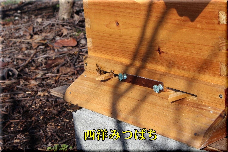 1hachi190204_026.jpg