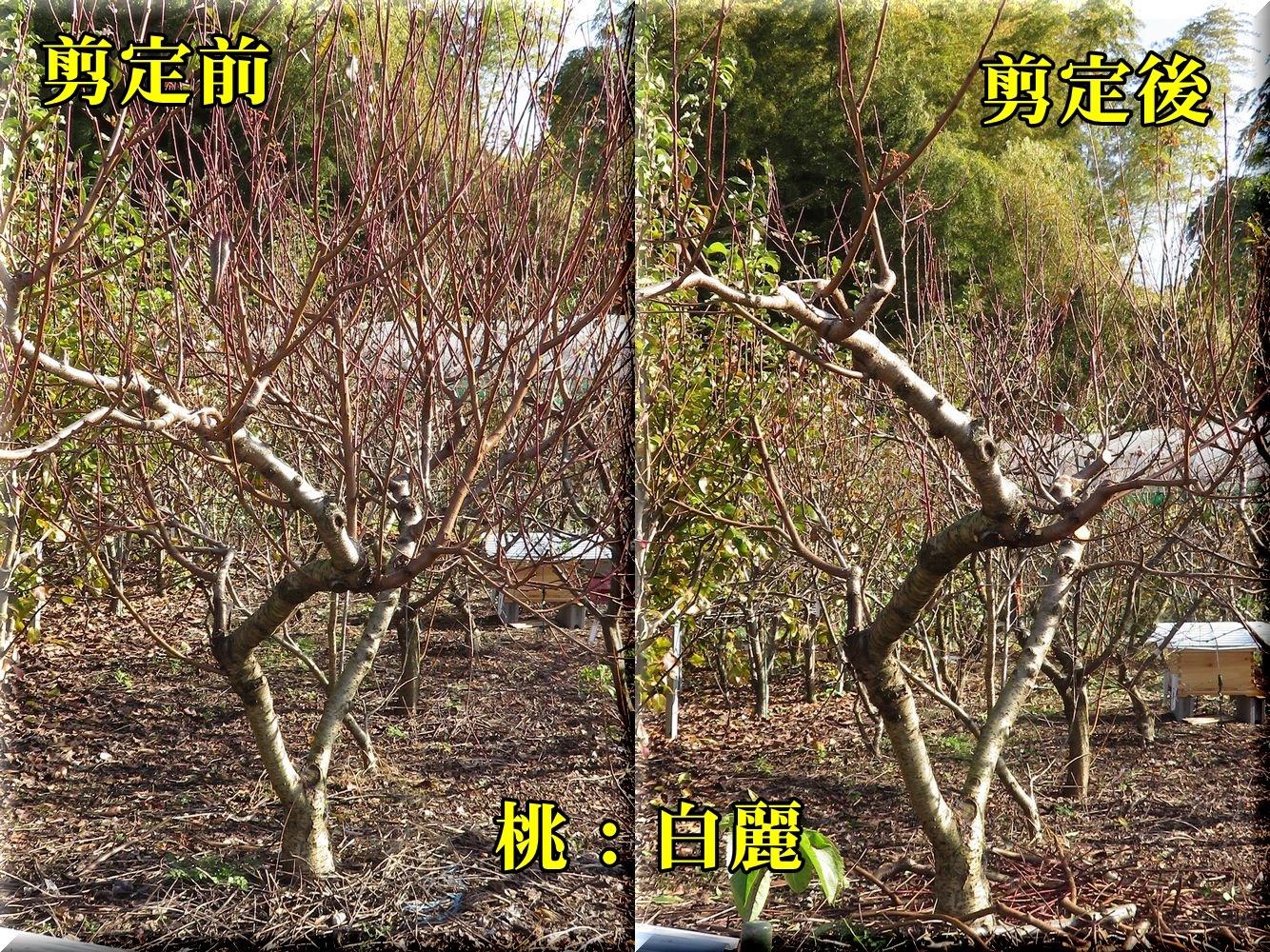 1hakurei181130_005.jpg