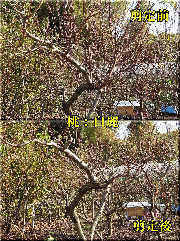 1hakurei181130_006.jpg