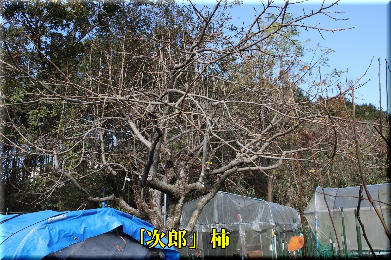 1jirou181214_008.jpg
