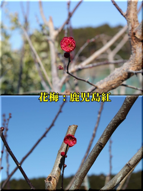 1kagosima190204_015.jpg