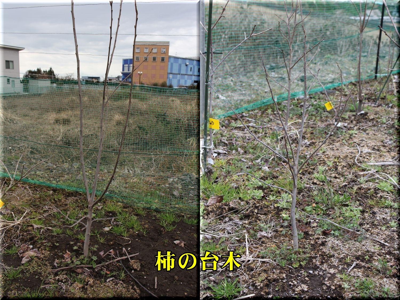 1kaki_dai190221.jpg