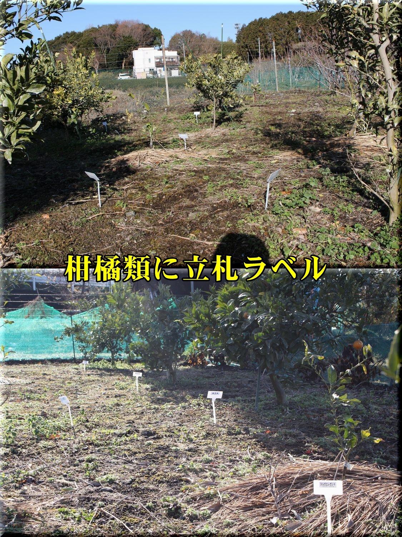 1kankitu190204_006.jpg