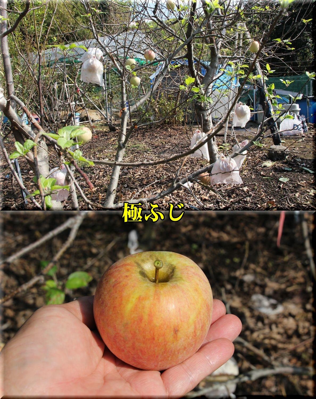 1kiwamefuji181020_010.jpg