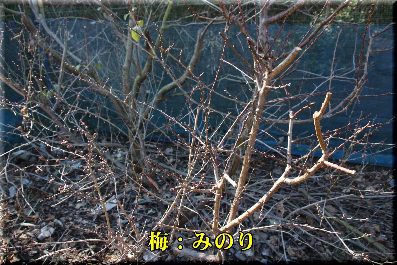 1minori190114_005.jpg