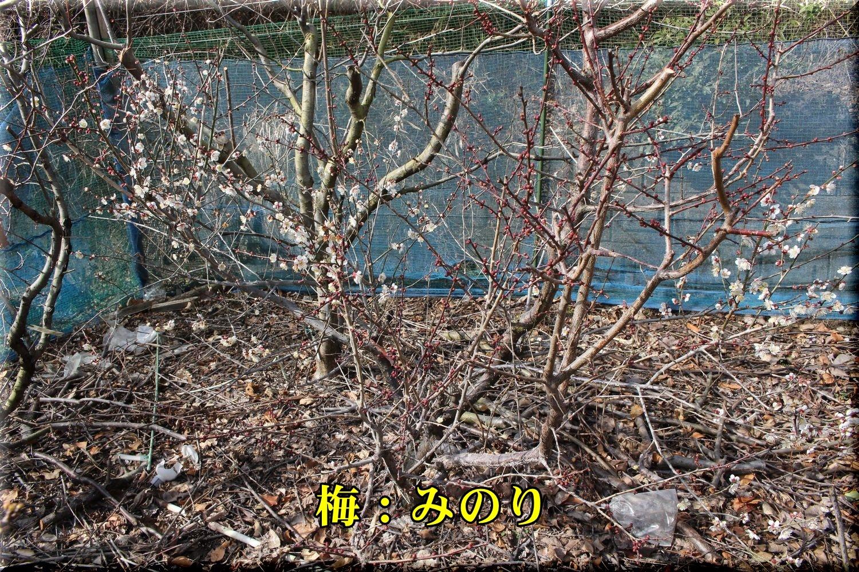 1minori190217_004.jpg