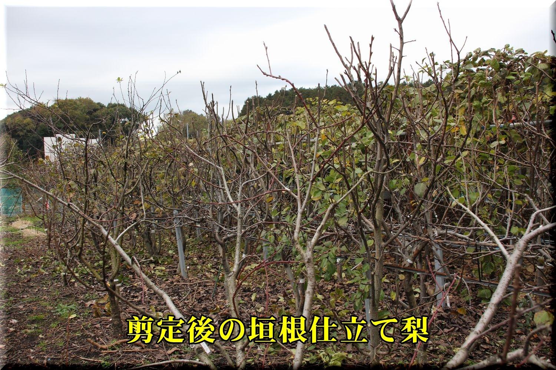 1nasi181216_008.jpg