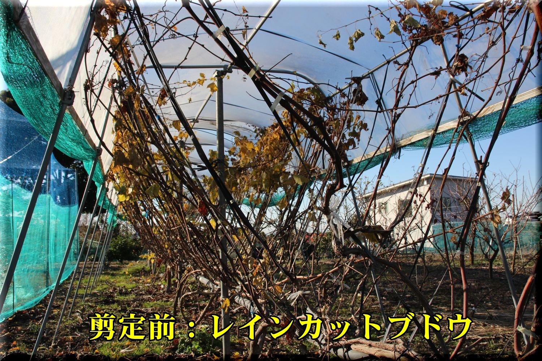1rainC181229_007.jpg