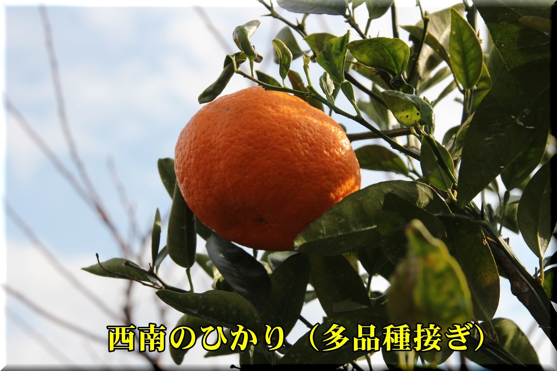 1seinanohikari181202_033.jpg