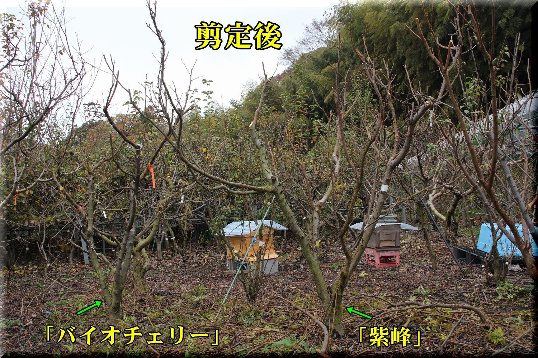 1sihou181204_009.jpg