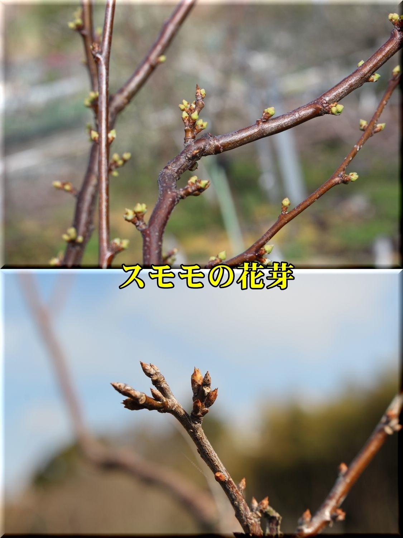 1sumomo190225_021.jpg