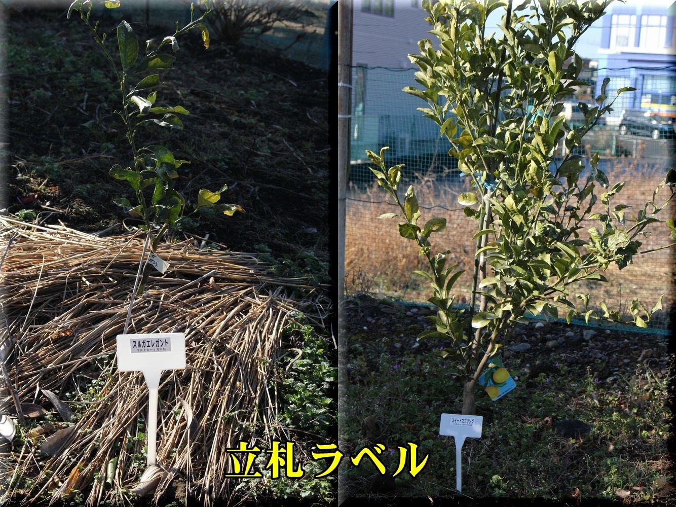 1suruga190204_007.jpg
