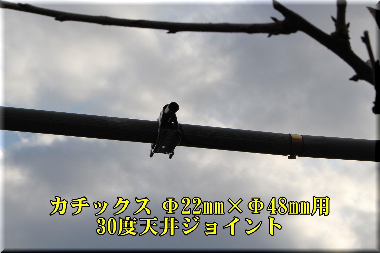 1tenjyou190213_004.jpg