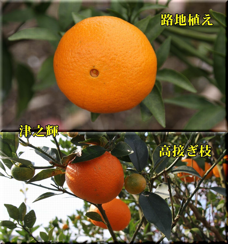 1tunoki181202_013.jpg