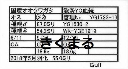 Gullさん1723-13-2
