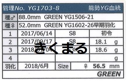 グリーンさんYG17038-2