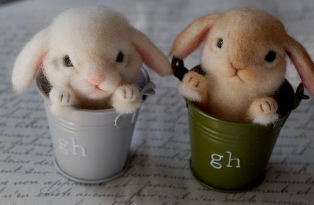 いきもにあウサギ