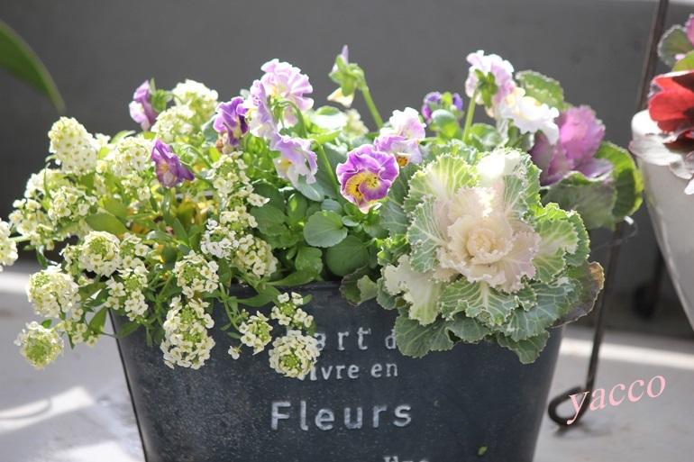 春のお花の寄せ植え